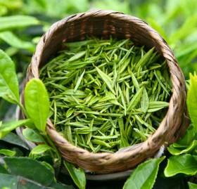фото Экстракт зеленого чая